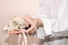 Χάπια απώλειας βάρους Στοκ φωτογραφία με δικαίωμα ελεύθερης χρήσης