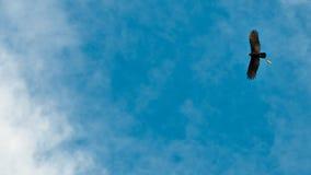 Χάραξη ενός αετού Στοκ εικόνα με δικαίωμα ελεύθερης χρήσης