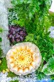 Χάραξη φρούτων πεπονιών στον κήπο Στοκ φωτογραφία με δικαίωμα ελεύθερης χρήσης
