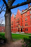 Χάρβαρντ τετραγωνικές ΗΠΑ Στοκ Φωτογραφία