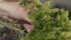 Χέρια αρχιμαγείρων που επιλέγουν μια σαλάτα σε μια κουζίνα απόθεμα βίντεο