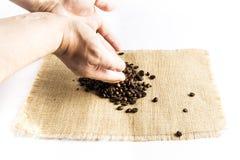 Χέρια ατόμων που απελευθερώνουν έναν σωρό των φασολιών καφέ σε ένα raffia τραπεζομάντιλο υφασμάτων σε ένα άσπρο υπόβαθρο στοκ εικόνα