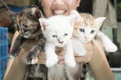 Χέρια γυναικών που κρατούν το λατρευτό γατάκι Στοκ Εικόνες