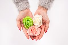 Χέρια γυναικών που κρατούν τρία όμορφα λουλούδια στο άσπρο υπόβαθρο Στοκ φωτογραφία με δικαίωμα ελεύθερης χρήσης