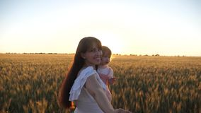 χέρια εκμετάλλευσης ταξιδιού μπαμπάδων και κορών μητέρων Η ευτυχής οικογένεια ενώνει παραδίδει τον τομέα του σίτου σε αργή κίνηση φιλμ μικρού μήκους