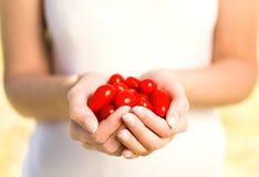 χέρια κερασιών που κρατούν τις ντομάτες Στοκ φωτογραφίες με δικαίωμα ελεύθερης χρήσης