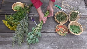 Χέρια κηπουρών βοτανολόγων που προετοιμάζονται να ξεράνει τα χορτάρια και τα καρυκεύματα απόθεμα βίντεο