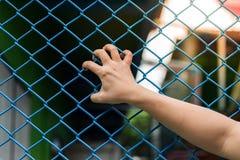 Χέρια κοριτσιών στο φράκτη καλωδίων Στοκ Φωτογραφίες