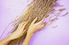 Χέρια κοριτσιών ` s σε μια ξηρά lavender ανθοδέσμη Στοκ Εικόνες