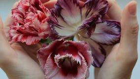 Χέρια κοριτσιών ` s σχετικά με όμορφα λουλούδια στο βάζο φιλμ μικρού μήκους