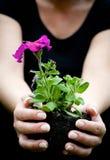 χέρια λουλουδιών που κ&rho Στοκ Φωτογραφία