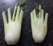 Χέρια μαράθου Στοκ Εικόνα