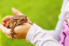 Χέρια με έναν βάτραχο Στοκ Φωτογραφίες