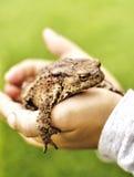 Χέρια με έναν βάτραχο Στοκ Φωτογραφία
