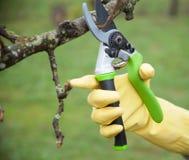 Χέρια με τα γάντια του κηπουρού που κάνουν τη συντήρηση wo Στοκ Εικόνα