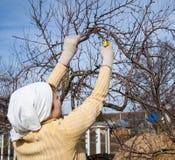 Χέρια με τα γάντια του κηπουρού που κάνουν τις εργασίες συντήρησης Στοκ Φωτογραφίες
