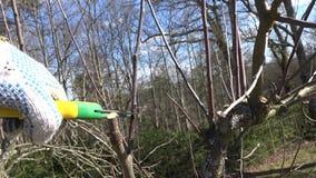 Χέρια με secateurs τα δέντρα περικοπής την άνοιξη Φορητός πυροβολισμός κινηματογραφήσεων σε πρώτο πλάνο απόθεμα βίντεο