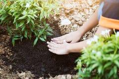 Χέρια παιδιών που φυτεύουν το νέο δέντρο στο μαύρο χώμα Στοκ Φωτογραφίες