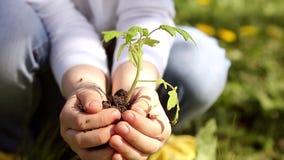 Χέρια παιδιών που κρατούν τις νέες εγκαταστάσεις στο πράσινο κλίμα άνοιξη εικόνες οικολογίας έννοιας πολύ περισσότεροι το χαρτοφυ φιλμ μικρού μήκους