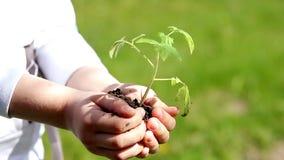 Χέρια παιδιών που κρατούν τις νέες εγκαταστάσεις στο πράσινο κλίμα άνοιξη εικόνες οικολογίας έννοιας πολύ περισσότεροι το χαρτοφυ απόθεμα βίντεο