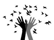 Χέρια, που απελευθερώνουν τα πουλιά γραπτά Στοκ Φωτογραφία