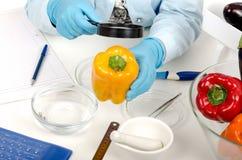 Χέρια που επιθεωρούν ένα κίτρινο έγγραφο κουδουνιών στο εργαστήριο phytocontrol Στοκ Εικόνες
