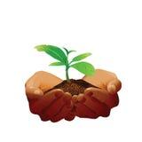 Χέρια που κρατούν ένα μικρό δέντρο Διανυσματική απεικόνιση