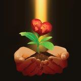 Χέρια που κρατούν ένα μικρό κόκκινο δέντρο καρδιών Ελεύθερη απεικόνιση δικαιώματος