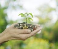 Χέρια που κρατούν μια ανάπτυξη δέντρων στα νομίσματα πέρα από το πράσινο bokeh backgroun Στοκ εικόνα με δικαίωμα ελεύθερης χρήσης