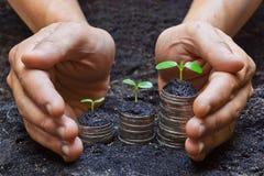 Χέρια που κρατούν την ανάπτυξη βόστρυχου στα νομίσματα Στοκ Φωτογραφίες