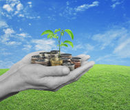 Χέρια που κρατούν τη φρέσκια πράσινη ανάπτυξη δέντρων στα νομίσματα πέρα από την πράσινη χλόη Στοκ Εικόνες