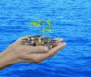 Χέρια που κρατούν τη φρέσκια πράσινη ανάπτυξη δέντρων στα νομίσματα πέρα από την μπλε θάλασσα Στοκ Εικόνες