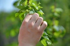 Χέρια που κρατούν τους λυκίσκους το καλοκαίρι Στοκ εικόνα με δικαίωμα ελεύθερης χρήσης