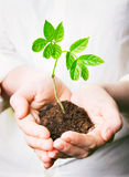 χέρια που κρατούν το νέο δέν& Στοκ Εικόνα