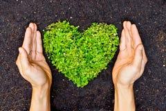 Χέρια που κρατούν το πράσινο διαμορφωμένο καρδιά δέντρο Στοκ Εικόνες