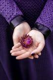Χέρια που κρατούν το τραχύ πορφυρό λουλούδι Στοκ Φωτογραφία
