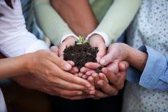 χέρια που κρατούν το φυτό Στοκ φωτογραφία με δικαίωμα ελεύθερης χρήσης