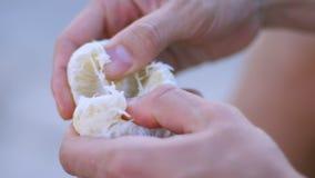Χέρια που ξεφλουδίζουν το εσπεριδοειδές Πορτοκαλί clementin μανταρινιών Εποχιακά εσπεριδοειδή φιλμ μικρού μήκους