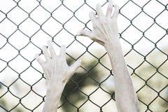 Χέρια που πιάνονται επάνω στο φράκτη καλωδίων πλέγματος φυλακών Στοκ Φωτογραφίες