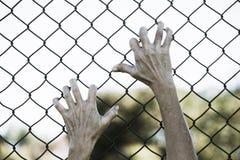 Χέρια που πιάνονται επάνω στο φράκτη καλωδίων πλέγματος φυλακών Στοκ Εικόνες