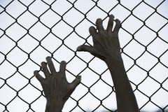 Χέρια που πιάνονται επάνω στο φράκτη καλωδίων πλέγματος φυλακών Στοκ φωτογραφία με δικαίωμα ελεύθερης χρήσης