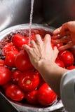 Χέρια που πλένουν τις μεγάλες κόκκινες ντομάτες Στοκ Εικόνες