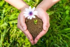 Χέρια που τείνουν ένα λουλούδι Στοκ Εικόνα