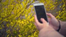 Χέρια της γυναίκας κινηματογραφήσεων σε πρώτο πλάνο που φωτογραφίζουν τα όμορφα λουλούδια άνοιξη φιλμ μικρού μήκους