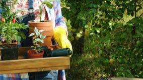 Χέρια της γυναίκας που φυτεύει τα λουλούδια στα δοχεία στον κήπο απόθεμα βίντεο