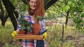 Χέρια της γυναίκας που φυτεύει τα λουλούδια στα δοχεία απόθεμα βίντεο