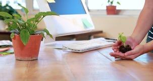 Χέρια της επιχειρηματία που παρουσιάζουν εγκαταστάσεις απόθεμα βίντεο