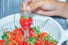 Χέρια της φράουλας πλύσης γυναικών κάτω από το τρεχούμενο νερό Στοκ Εικόνες