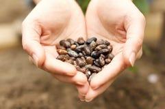 χέρια τροφών έννοιας που κρατούν τον κόσμο σπόρων Στοκ Εικόνα