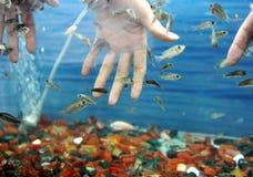 χέρια ψαριών Στοκ φωτογραφία με δικαίωμα ελεύθερης χρήσης
